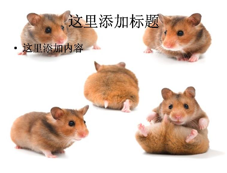 可爱的龙猫高清图片动物素材模板免费下载