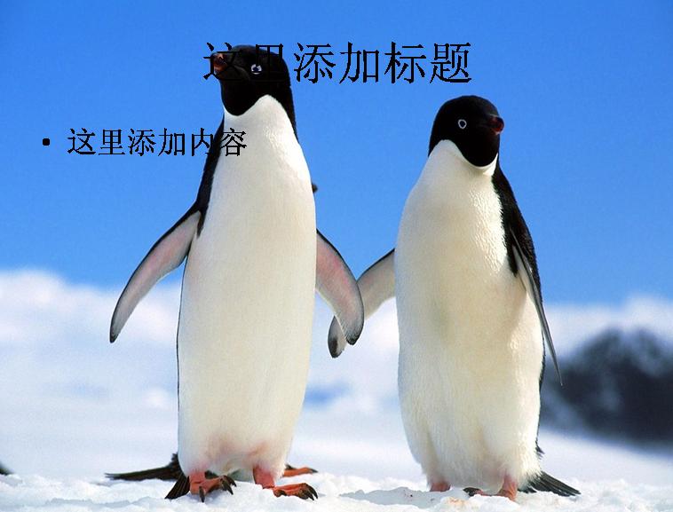 呆萌企鹅ppt(14_26)模板免费下载