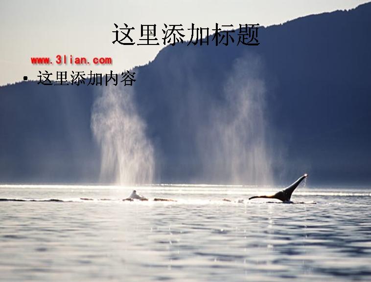 喷水鲸鱼图片ppt