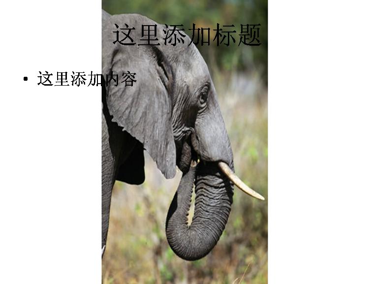 大象野生动物摄影; 大象高清图片;;