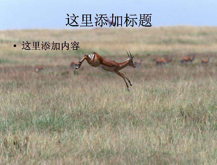 奔跑的鹿图片模板免费下载