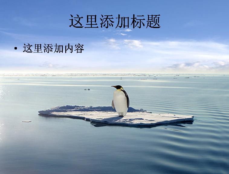 孤独的企鹅图片ppt素材动物素材