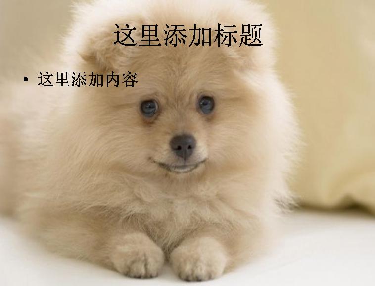 狗狗幻灯片素材