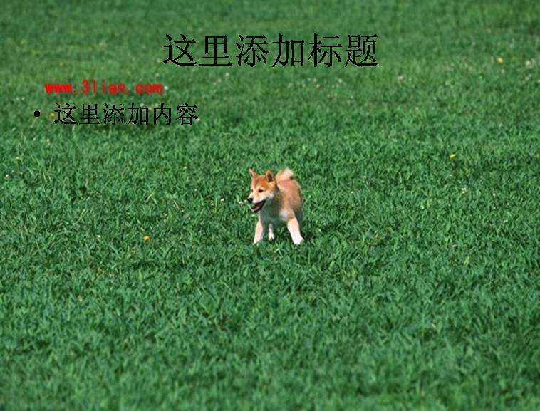 小狗玩耍图片ppt模板免费下载
