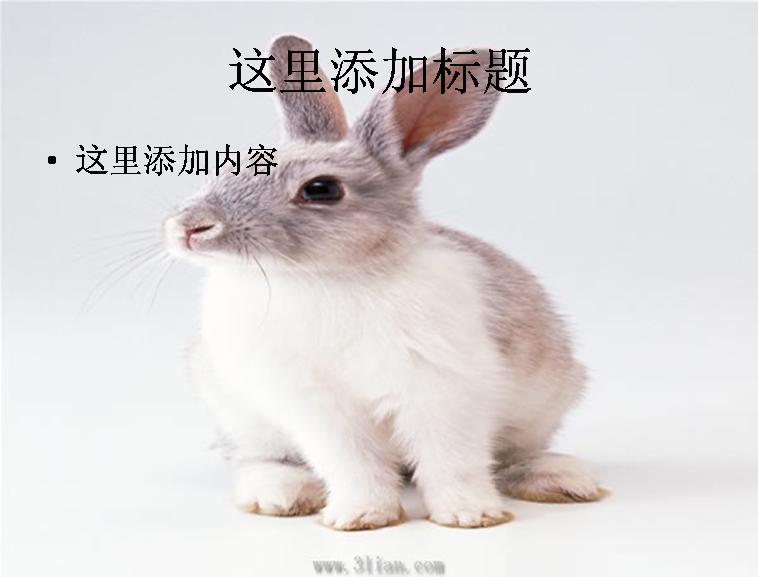 小白兔图片模板免费下载