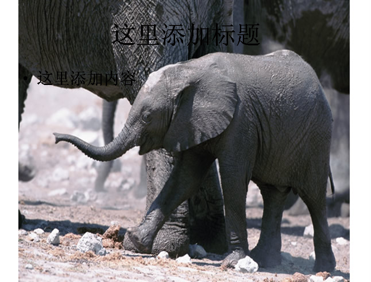 小象素材图片模板免费下载