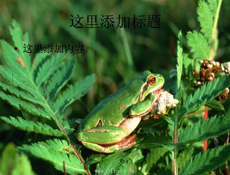青蛙的生长时期