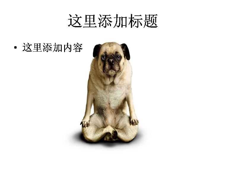 ppt幽默动物图片素材
