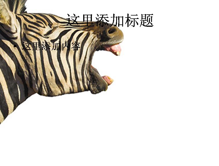 斑马图片动物模板免费下载