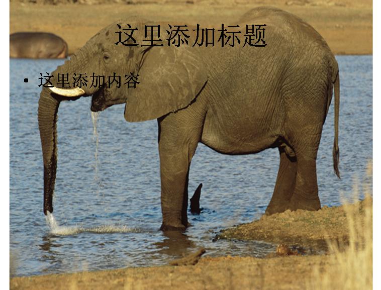河里玩水的大象图片ppt模板免费下载