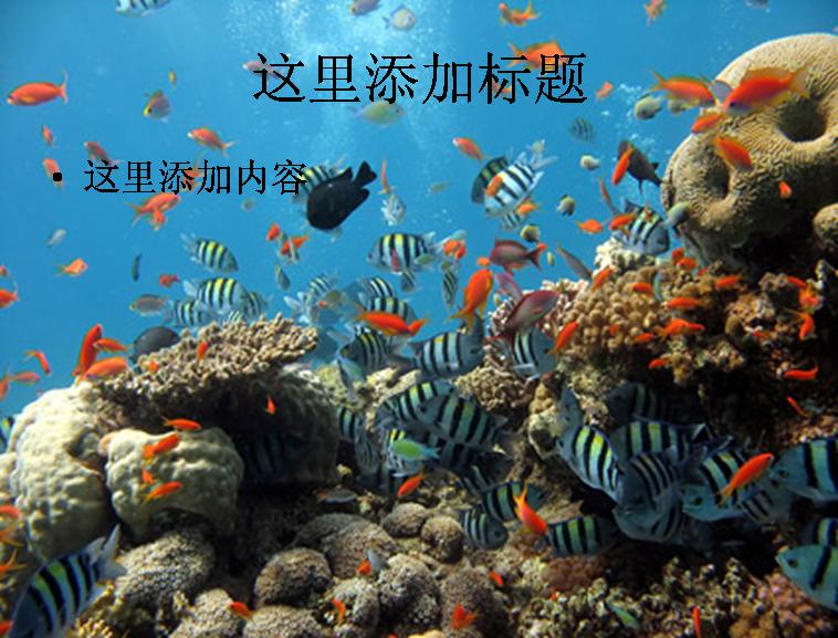 海底世界图片ppt素材动物素材