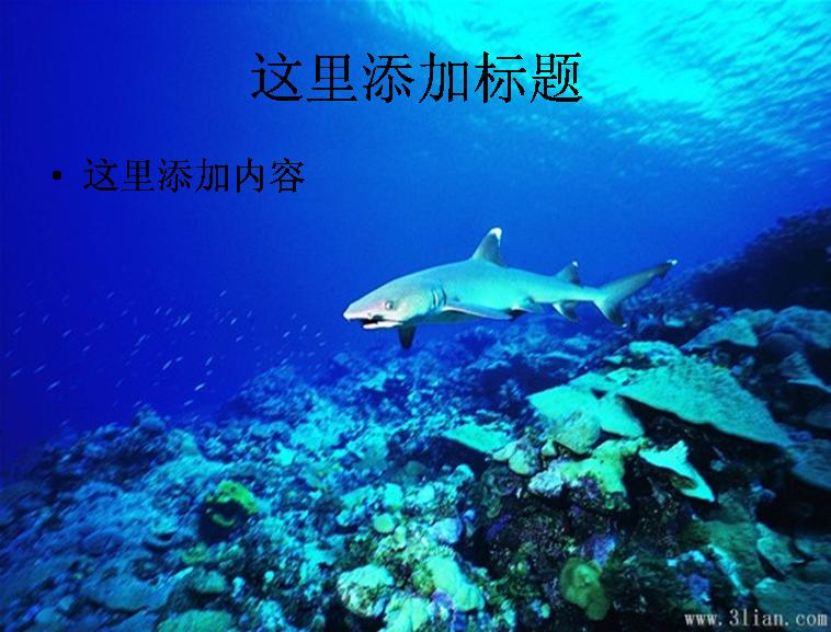 海底动物-鲨鱼图片模板免费下载