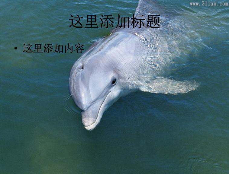 海洋动物海豚图片模板免费下载
