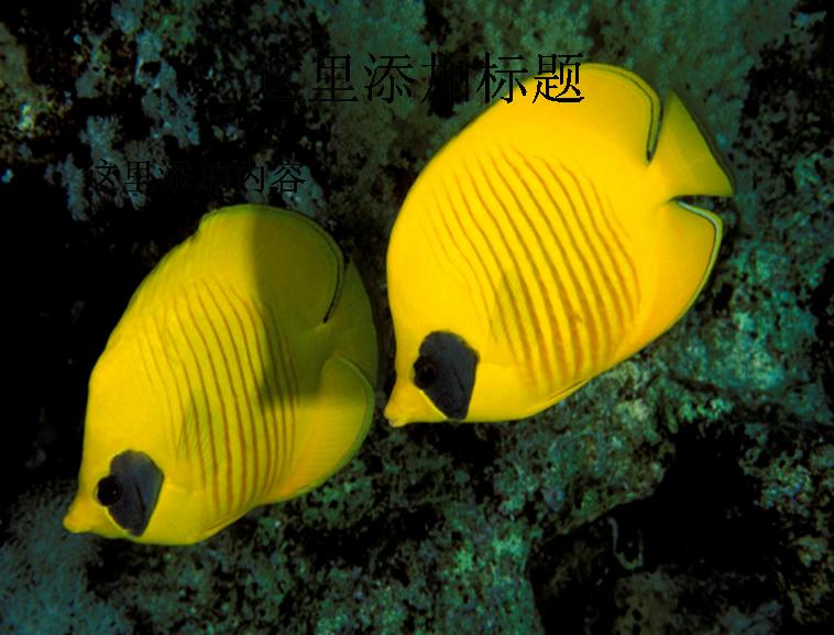 海洋鱼群高清图片ppt