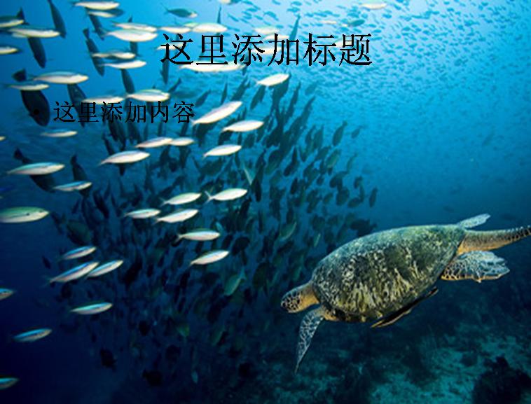 壁纸 动物 海底 海底世界 海洋馆 水族馆 鱼 鱼类 桌面 758_577
