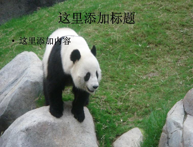 熊猫ppt精选集(17_32)模板免费下载