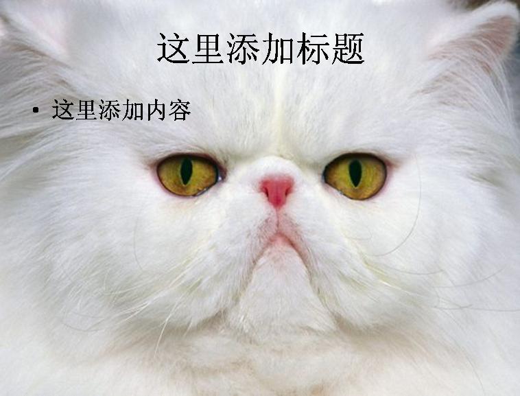 猫咪ppt-1-5动物素材模板免费下载