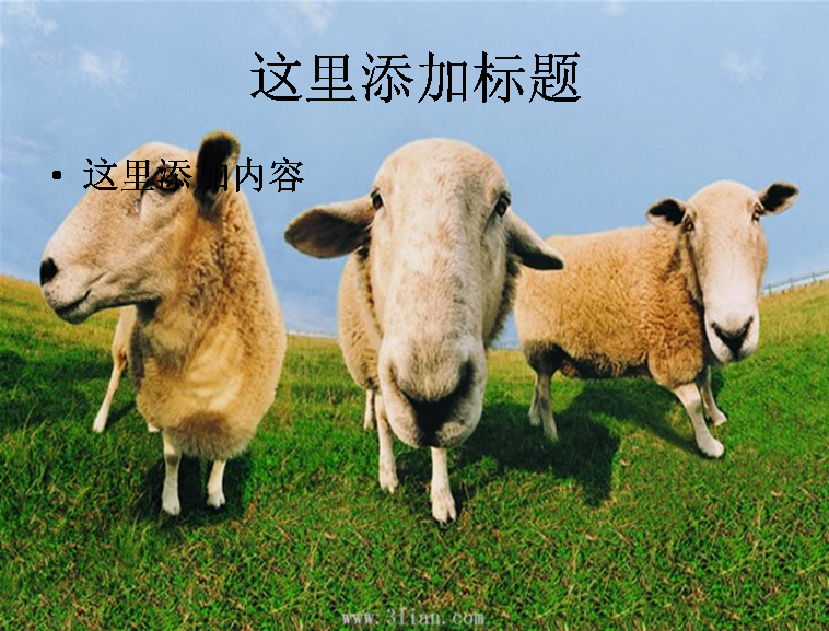 羊动物图片ppt模板免费下载