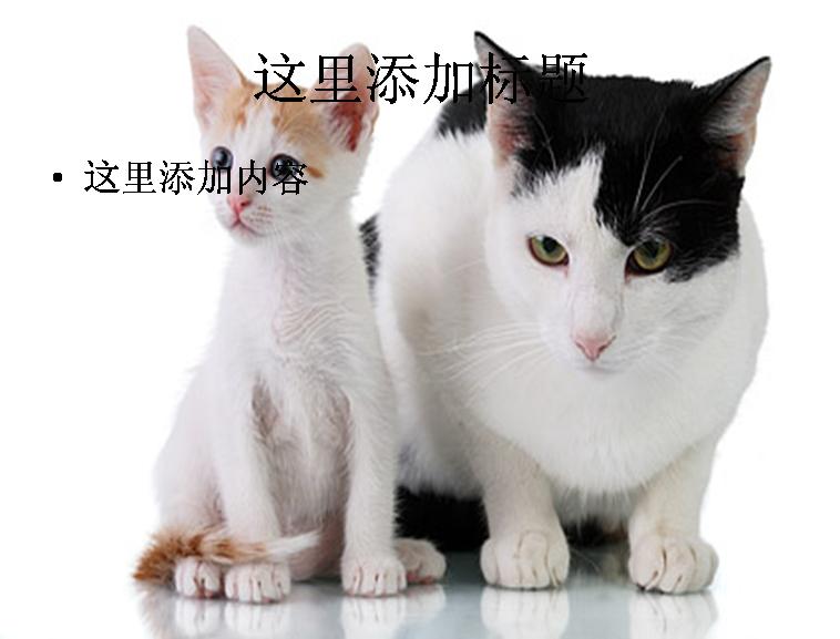 肥猫与瘦猫图片ppt素材动物素材模板免费下载