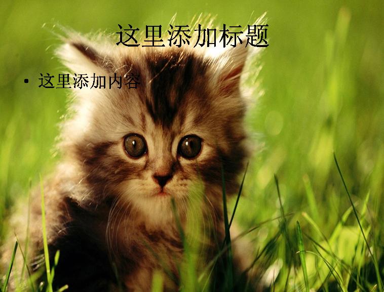 萌猫ppt(6_10) 标  签: 可爱动物动物萌照 支持格式: ppt wpp