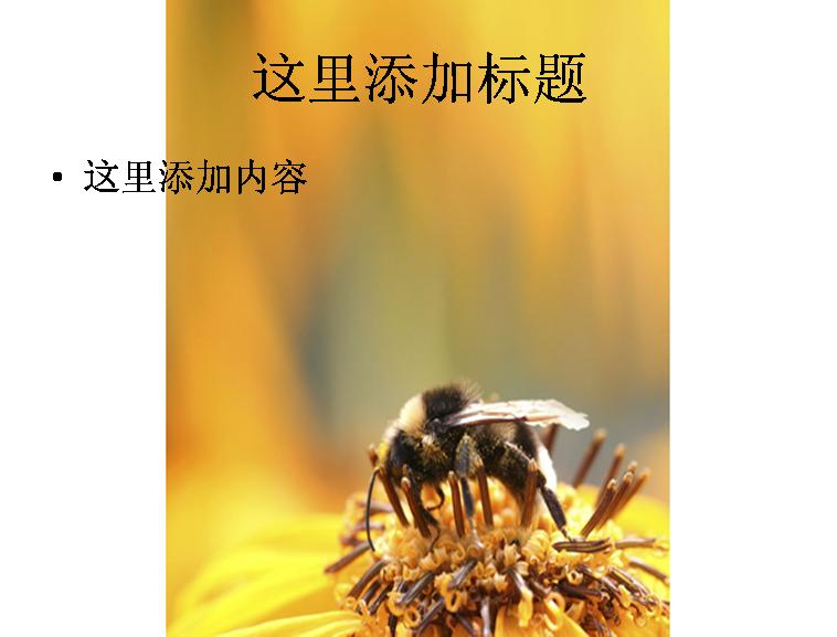 蜜蜂采蜜图片ppt