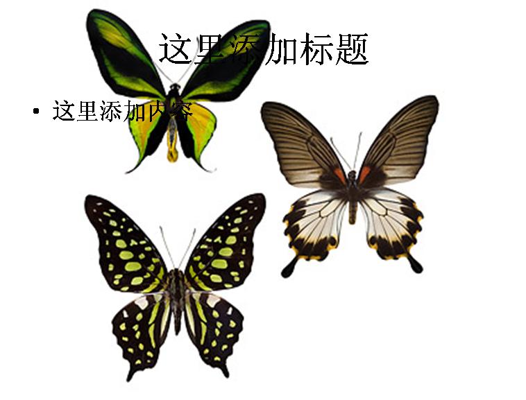 蝴蝶图片素材-5动物素材