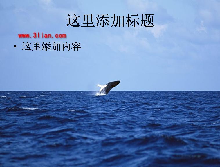 鲸鱼图片ppt