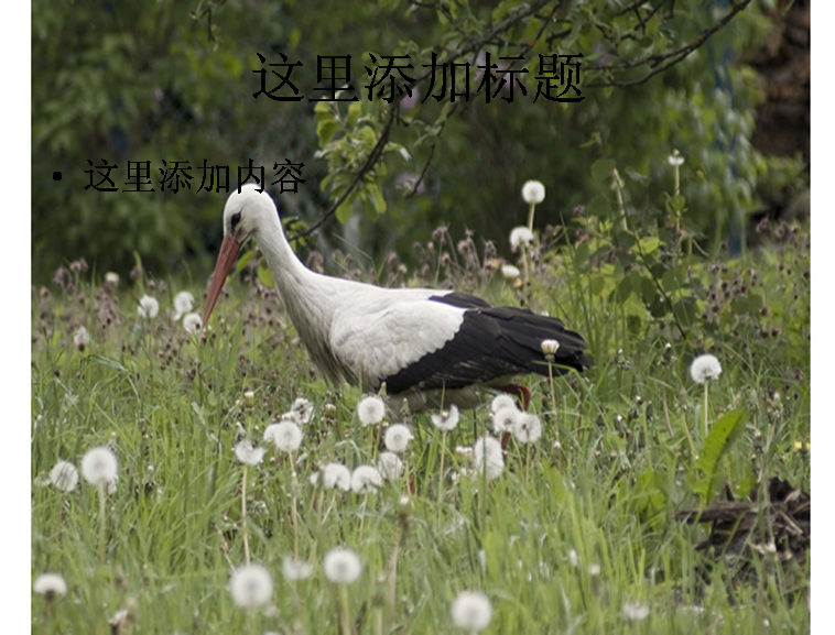 鹤高清图片