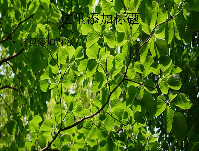 保护眼睛的树枝树叶树夏天电脑ppt封面模板免费下载