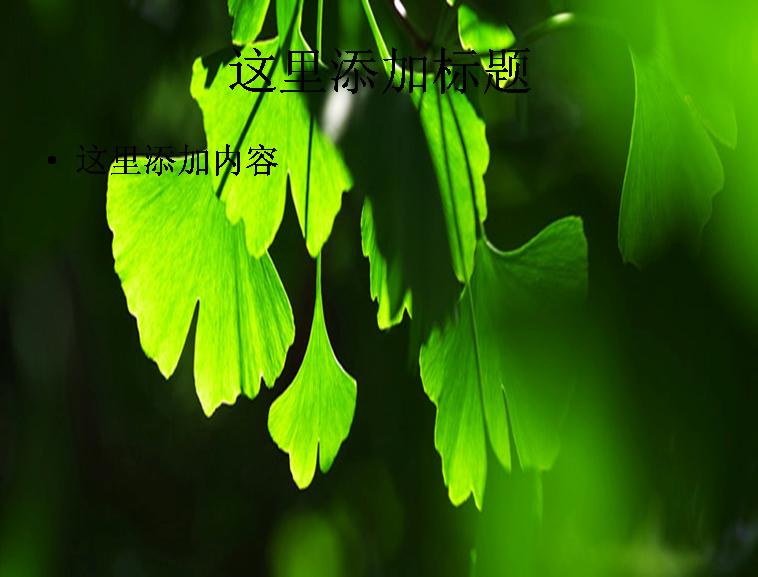 养眼的绿色叶子ppt 标  签: 风景自然风景背景图片风景图片迷人景色
