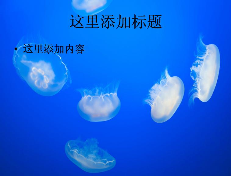 唯美水母高清ppt(10)模板免费下载