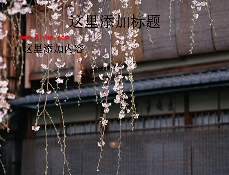 日本樱花风景模板免费下载