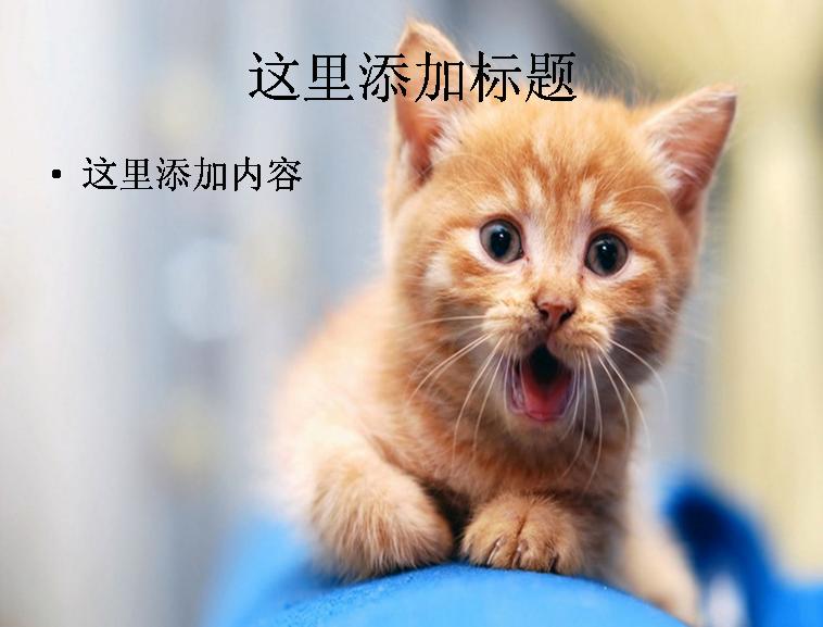 可爱小猫图片小猫图片,可爱小猫高清图片素材下载,萌宠,小猫咪,家猫