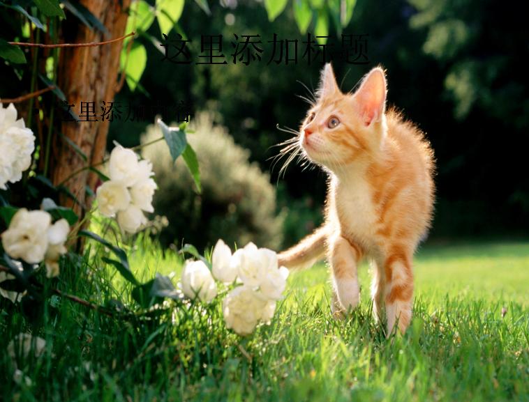 与[电脑ppt封面可爱猫咪背景图片(12)]同类模版