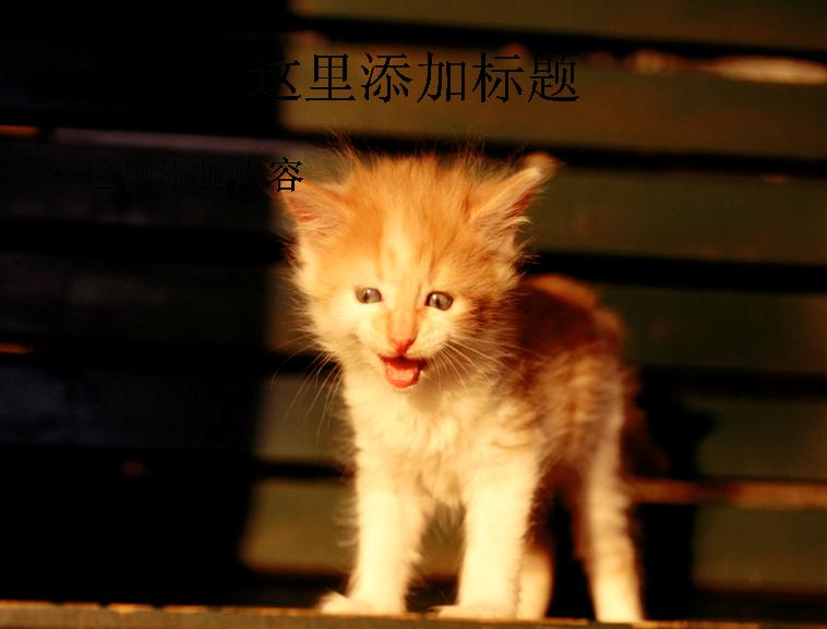 电脑ppt封面可爱猫咪背景图片(2)模板免费下载