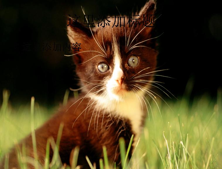 电脑ppt封面可爱猫咪背景图片(4)