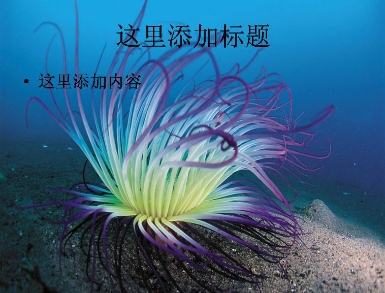 电脑ppt封面海底世界背景图片(2)模板免费下载