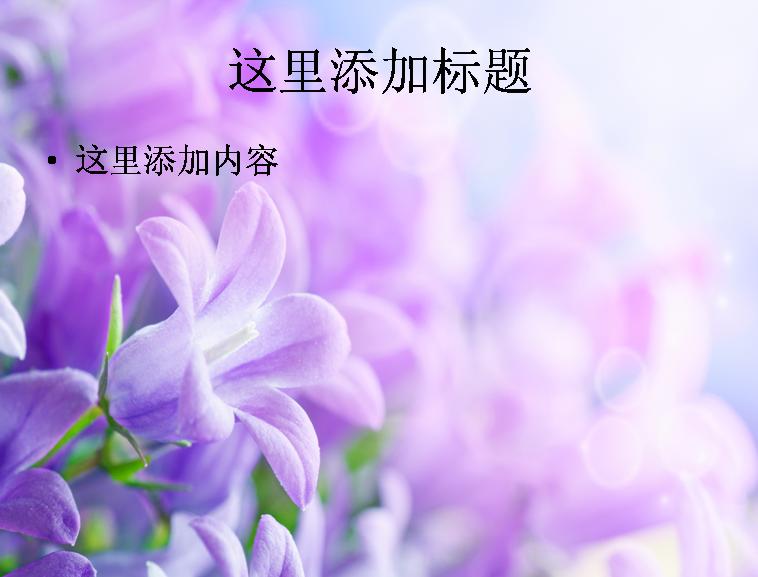 电脑ppt封面花卉美丽盛开高清图片(9)模板免费下载