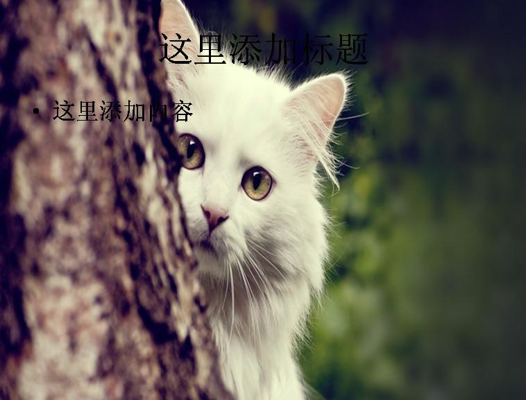 电脑ppt封面超可爱动物背景图片(2)