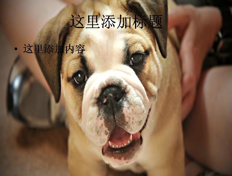 电脑ppt封面超可爱动物背景图片(5)模板免费下载_109