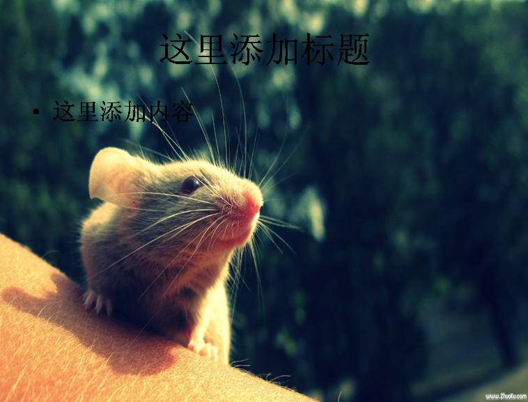 电脑ppt封面超可爱动物背景图片(7)模板免费下载