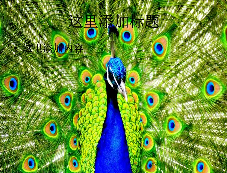 电脑ppt封面超可爱动物背景图片(8)模板免费下载