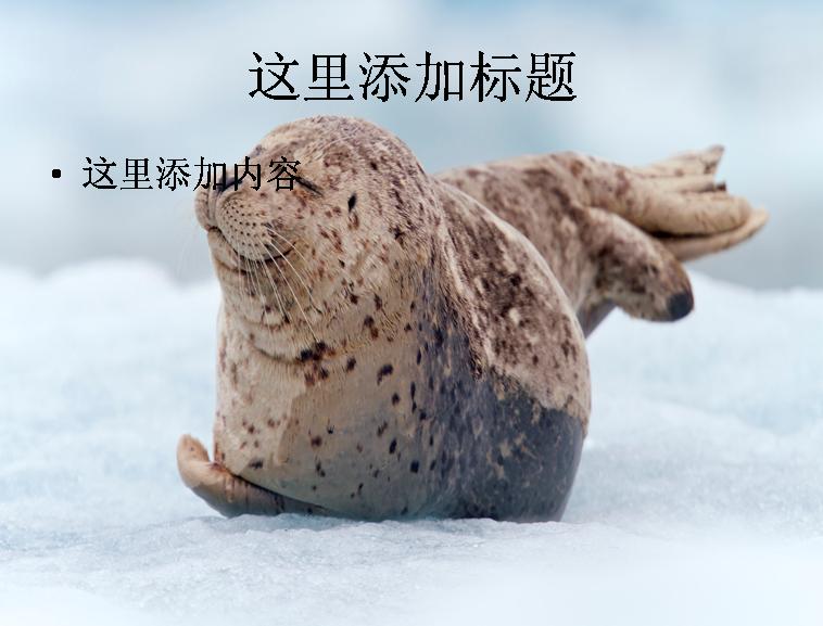 电脑宽屏ppt封面可爱的动物风景图片(12) 支持格式:ppt wpp 文件大小