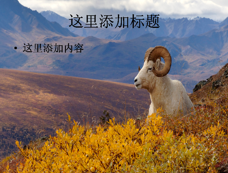 电脑宽屏ppt封面可爱的动物风景图片(14)