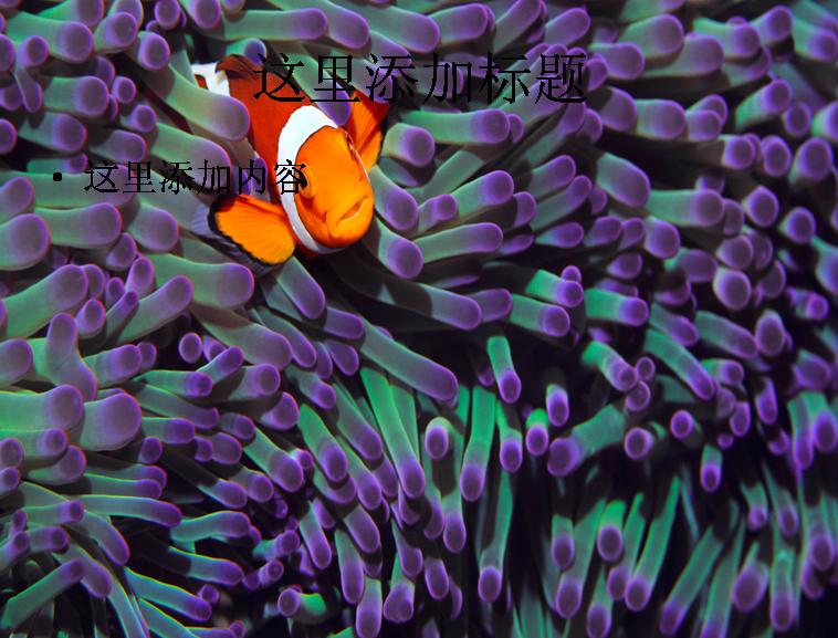 电脑宽屏ppt封面可爱的动物风景图片(17)