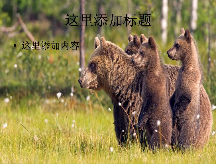 电脑宽屏ppt封面可爱的动物风景图片(7)模板