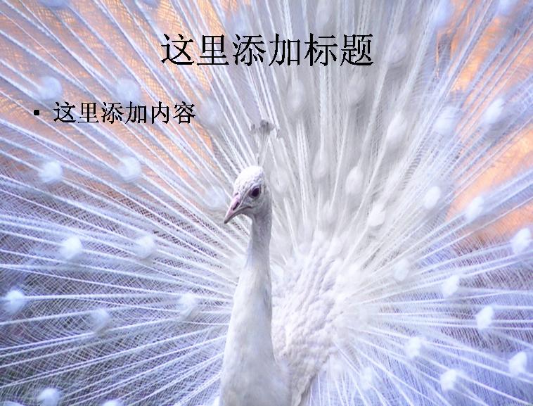 美丽的动物世界(3)模板