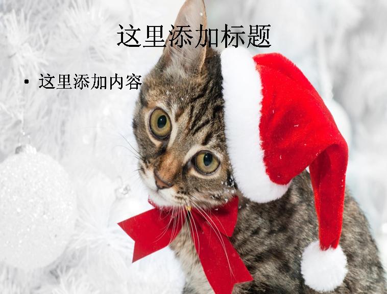 圣诞节可爱猫咪ppt(3_16)
