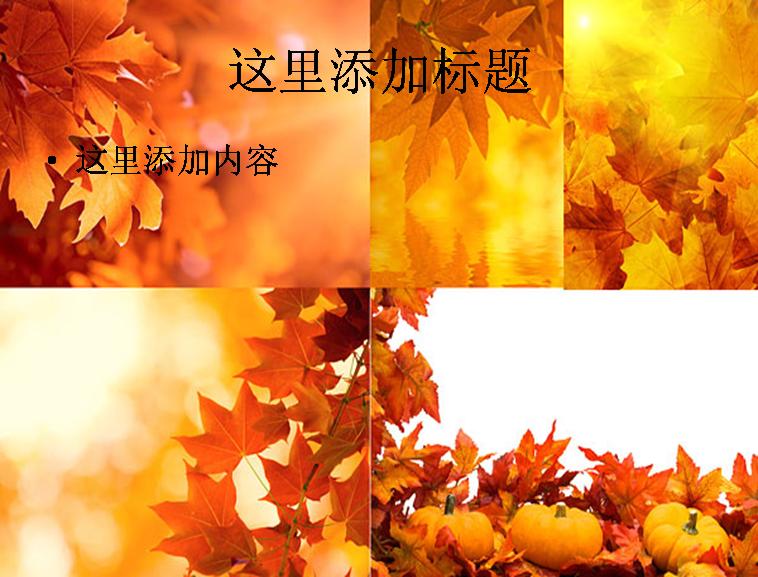 5张秋天的树叶高清图片ppt植物素材模板