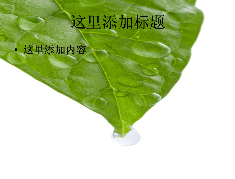 一片树叶绿叶和露珠高清图片ppt植物素材模板免费